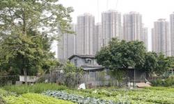 Hands-On Urbanism 1850–2012, Farma Ma Po Po, vesnice / Dorf Ma Shi Po, Honkgong. Foto: Shu-Mei Huang